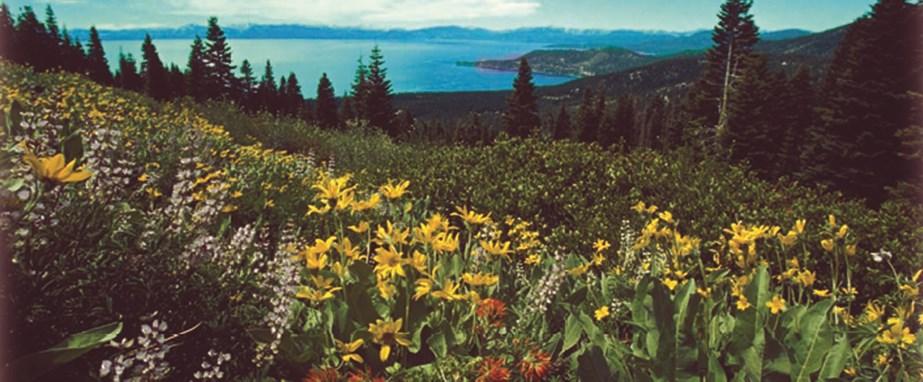 Tahoe City Ca Massage