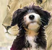 Mona- dog-Lion