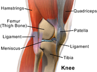 knee diagram arthritis